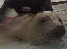 FG_seal-pup